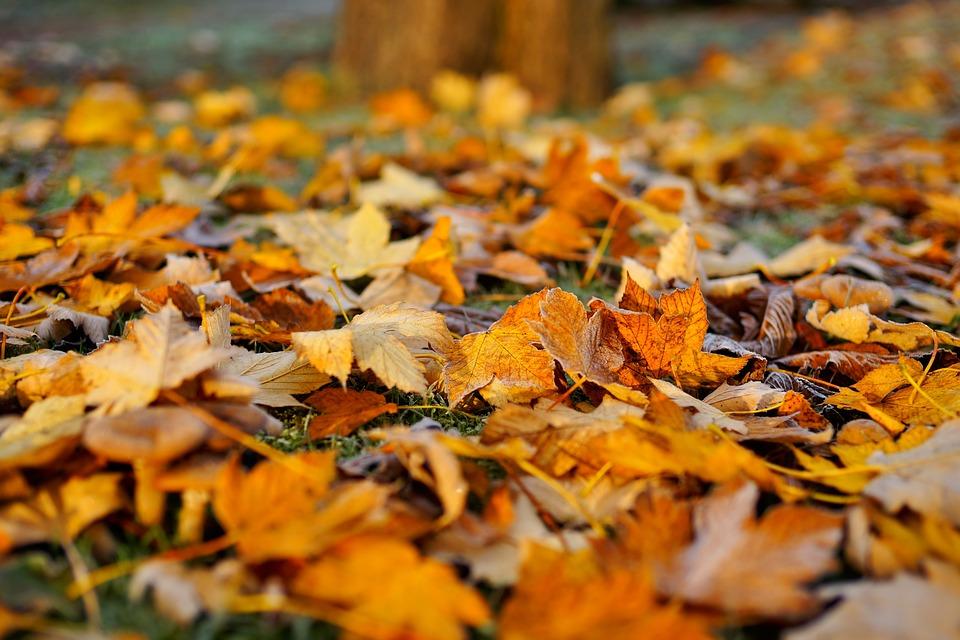 Haz del otoño tu estación favorita