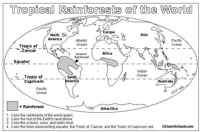amazon rainforest layers diagram clothes dryer wiring worksheet meningrey tropical printable home decor photos