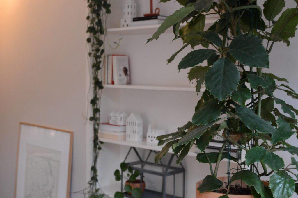 Tetrastigma voinieranum bladeren
