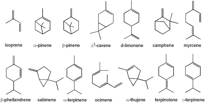 Derived Lipids- Steroids And Terpenes | A-Level Biology ...