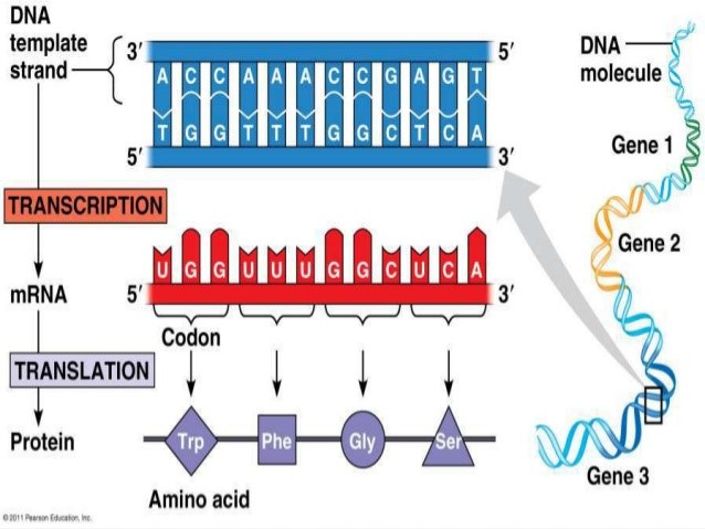 types of mutations points
