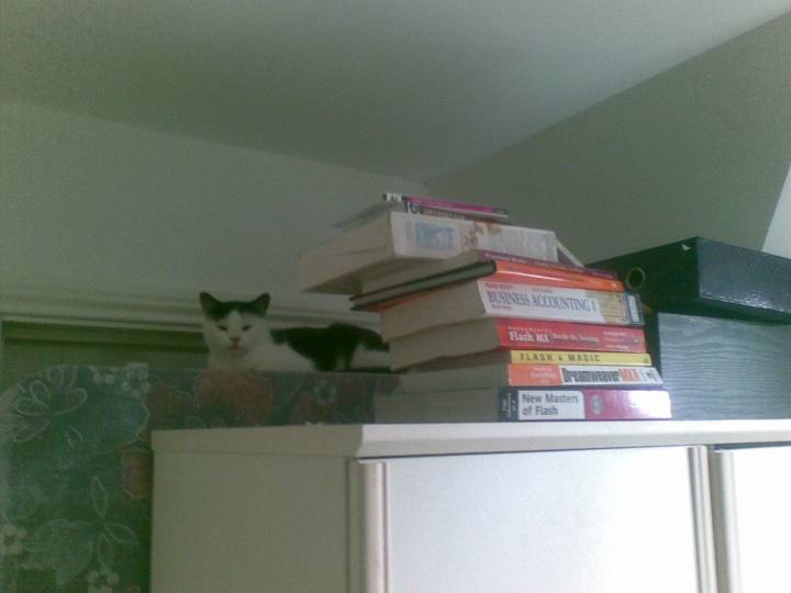 Our cat has a new hang-out