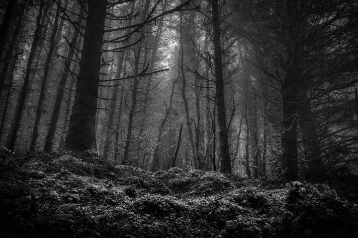 Misty Ballycastle Forest