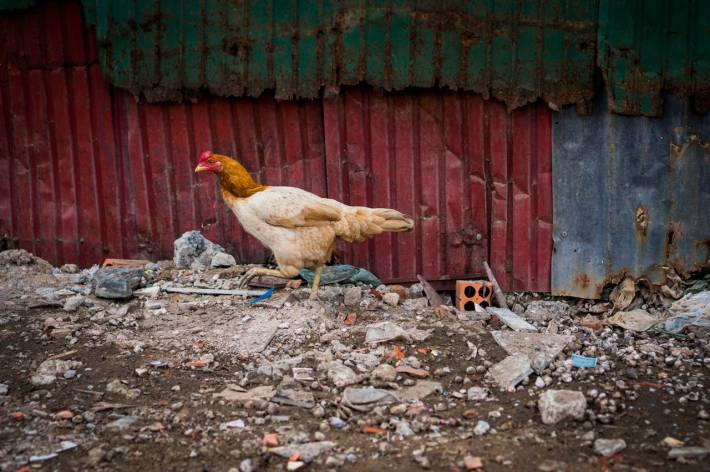 Chicken Run - A photo by Alex Leonard