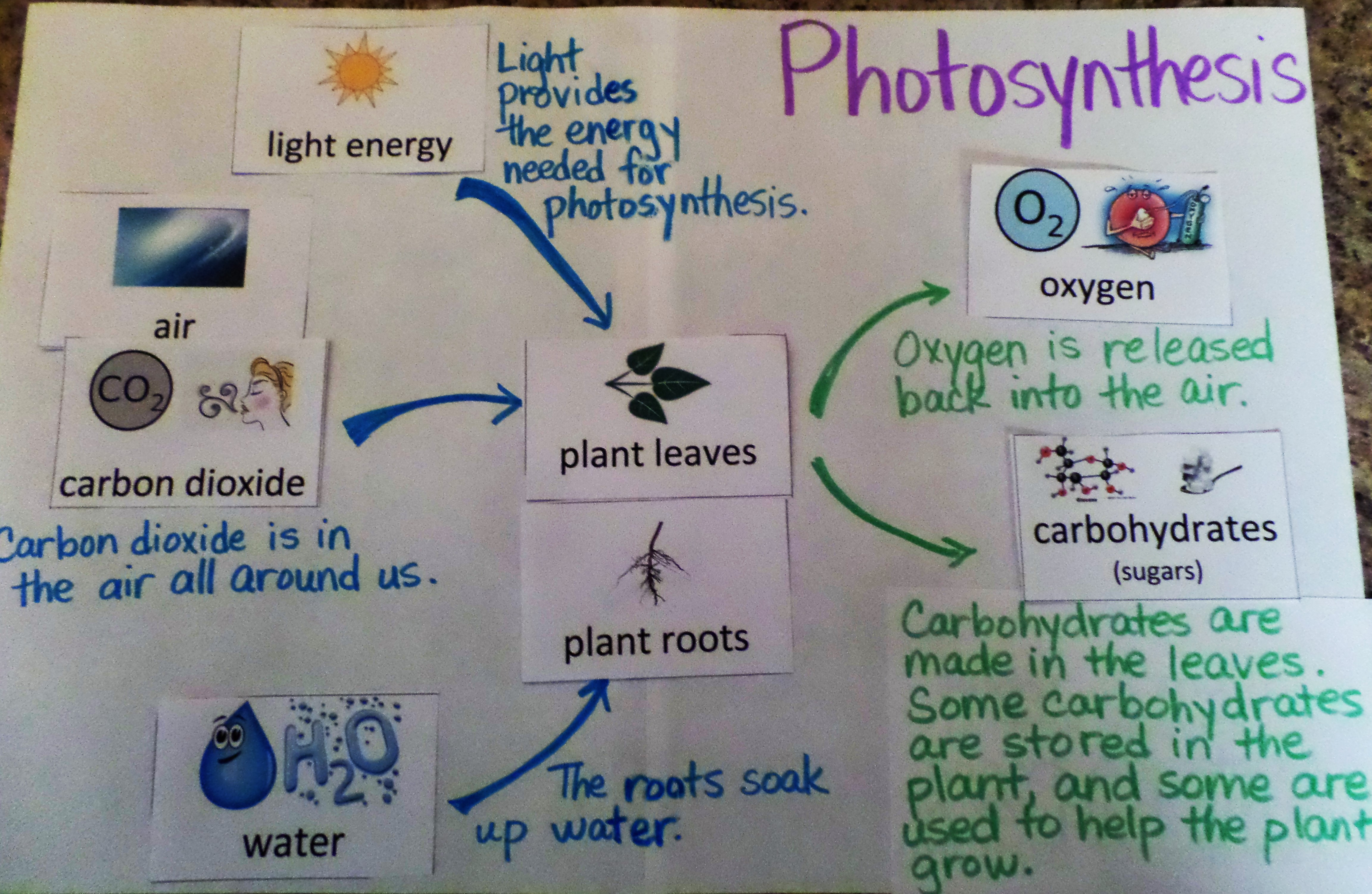 photosynthesis process diagram for 5th grade industrial wiring symbols alex alabama learning exchange