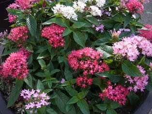 さくらトラムの花壇
