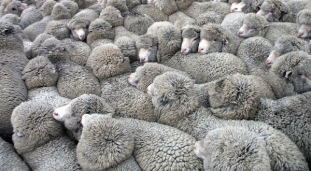 Don't get lost in the herd--think!