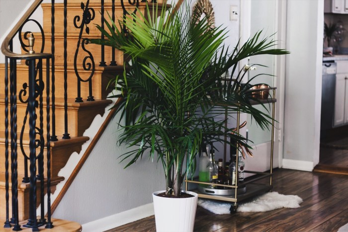 HOW TO ADD GREENERY TO YOUR HOME