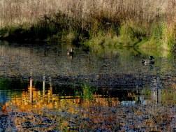 impressionist-ducks-3