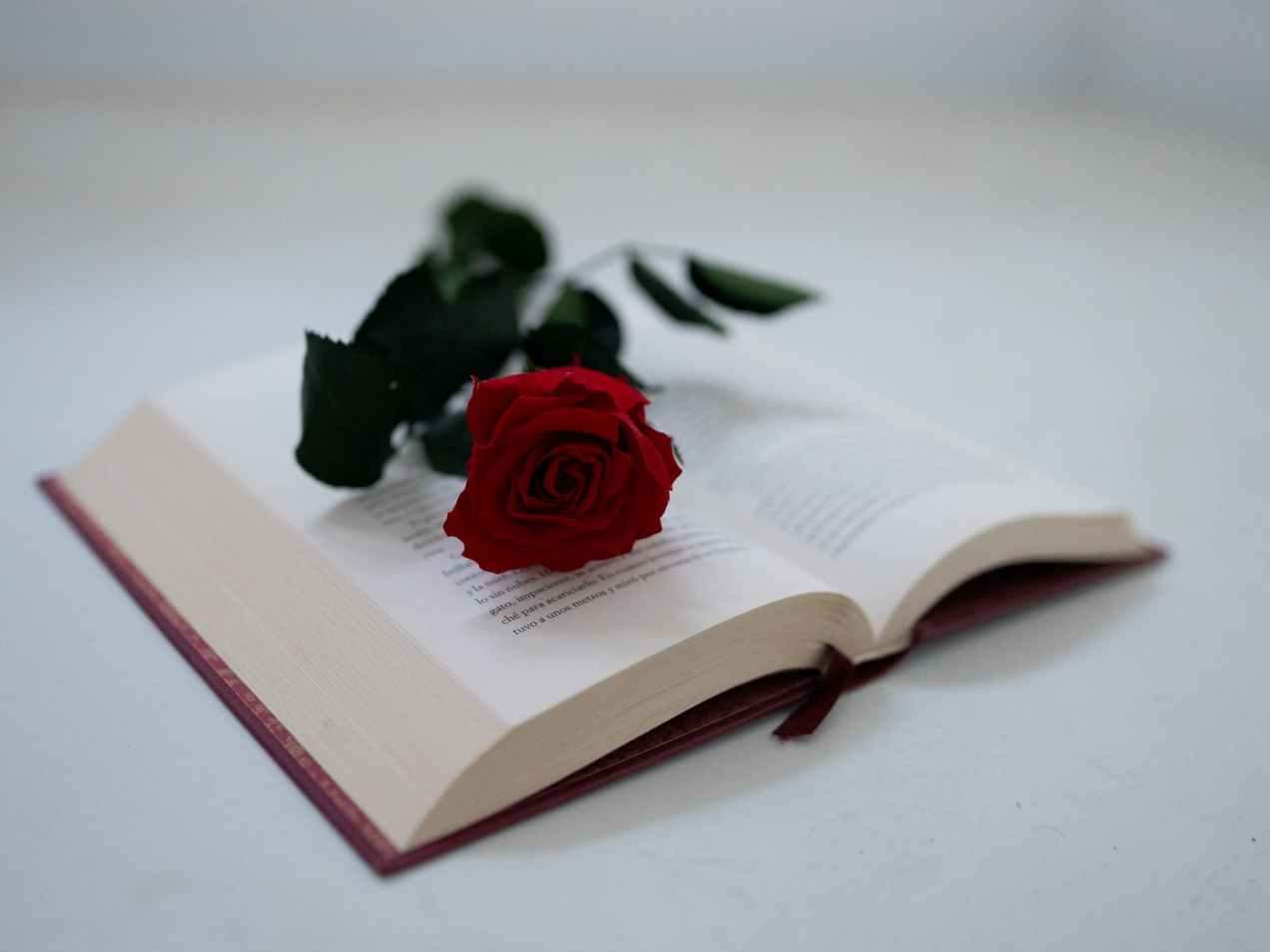 a red rose on an open book