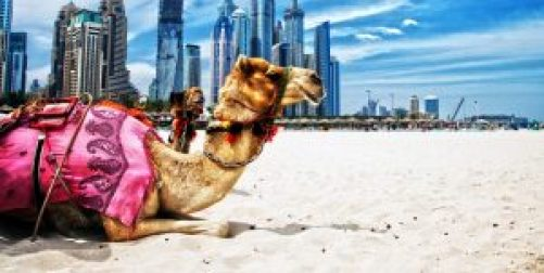 camel-in-arabian-city-and-desert-wallpapers-hd
