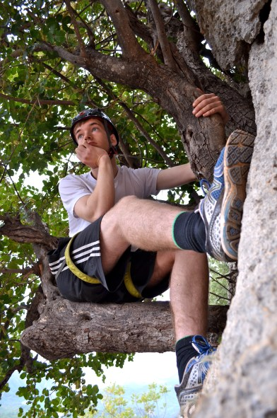 Hanging in the tree
