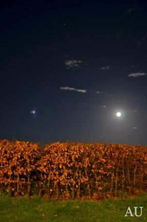 Full Moon in Denmark