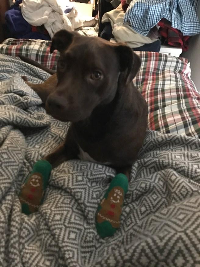 brun-in-socks