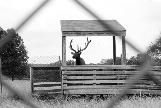 Missouri Town 1855 - Elk 3