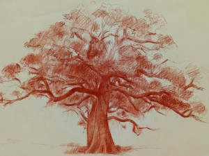 Drawing by Evan Salmon 'Tree study, Dunmore'