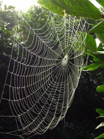 A dew kissed spider web in Langley B.C. on traditional unceded territory of the Kwantlen First Nation.