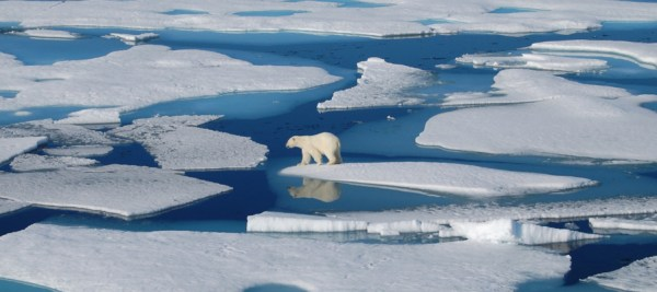 TG polar bear