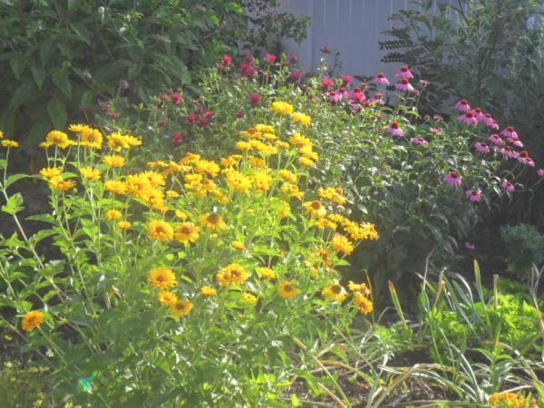 july garden20