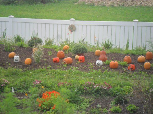 pumpkin hill3