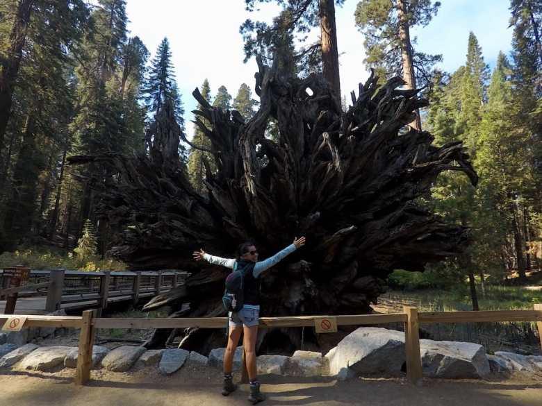 Yosemite park guide