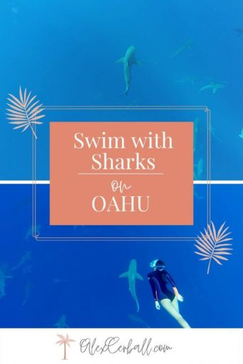 Swim with sharks on Oahu Hawaii North Shore
