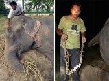 Elefante Raju 09