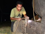 Elefante Raju 07