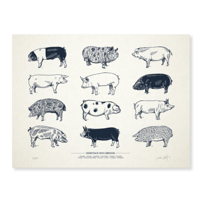 print of 12 different breeds of heritage hogs