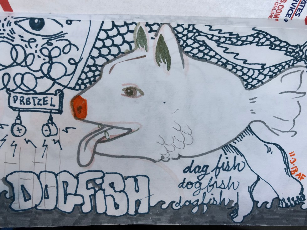 Drawing of dogfish by Alex Feliciano