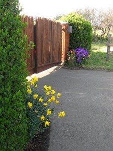 Fort Bragg, California yard clean-up services. Landscaping services of Mendocino County. Landscape now, pay later with Quaday Financing   Alex's Gardening Service