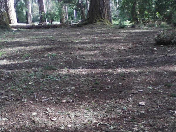 Alex's Gardening Service provides lawn care maintenance for commercial and residential properties. Mendocino County Spring and fall lawn clean-up services | Alex's Gardening Service