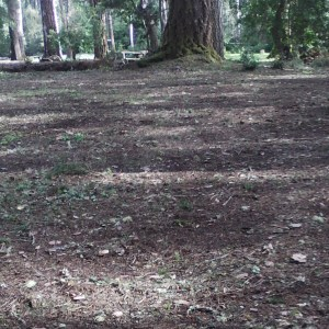 Alex's Gardening Service provides lawn care maintenance for commercial and residential properties. Mendocino County Spring and fall lawn clean-up services   Alex's Gardening Service