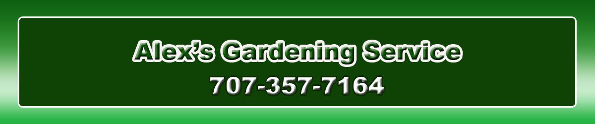 Convertirse en un vegetariano es la mejor opción para las personas que no quieren enfermarse. | Alex's Gardening Service