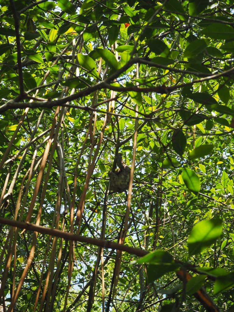 where to see sloths in Costa Rica