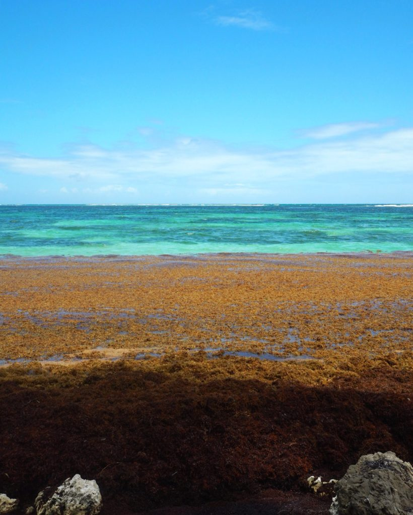 seaweed washing onto beach in St Anne Guadeloupe