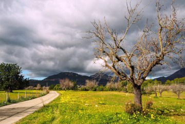 tree with stormy sky in the Mallorca countryside