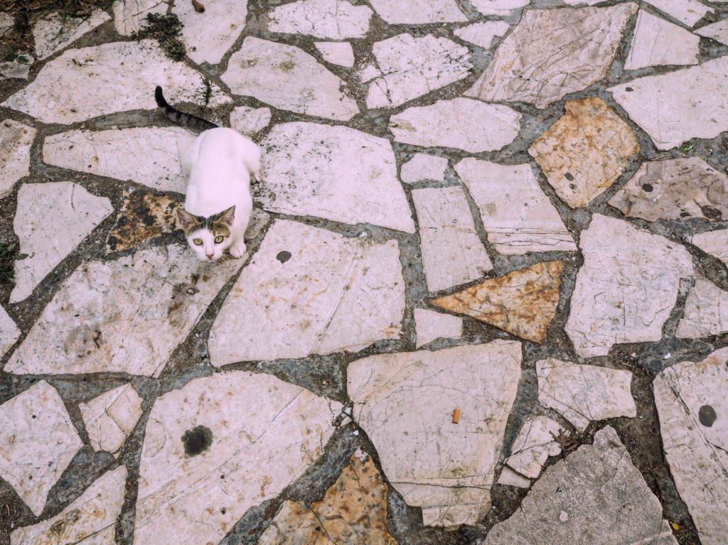 a cat in a secret Greek village