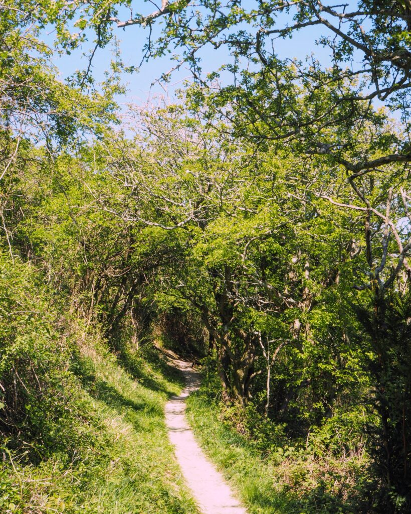 the South Downs way in May