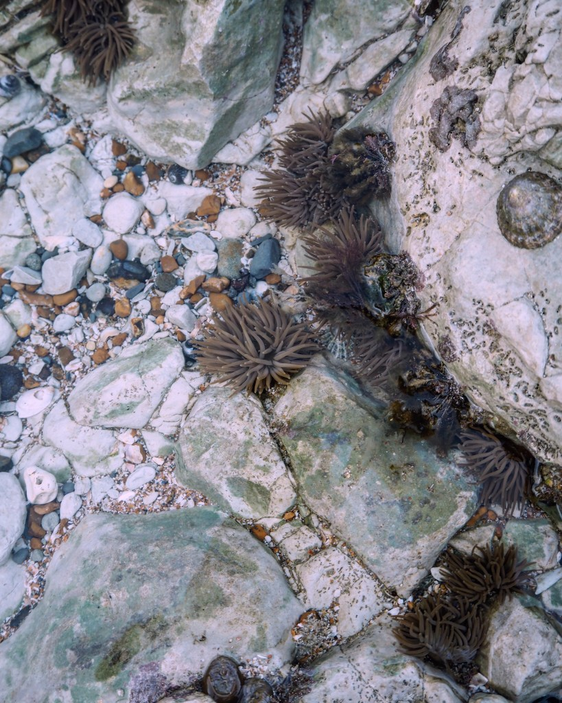 rockpools at Holywell, Eastbourne