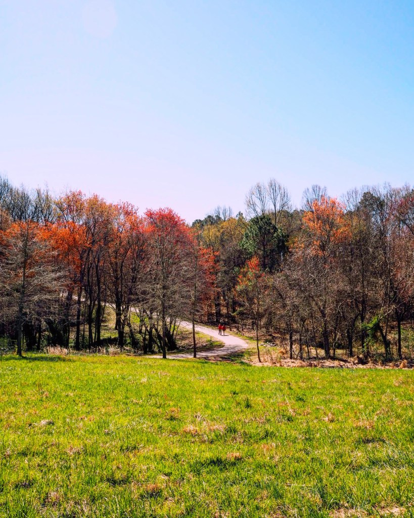 Spring trees in Raleigh North Carolina