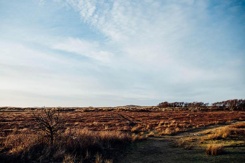Heide en duinen bij Oosterend, Terschelling, maart 2017.