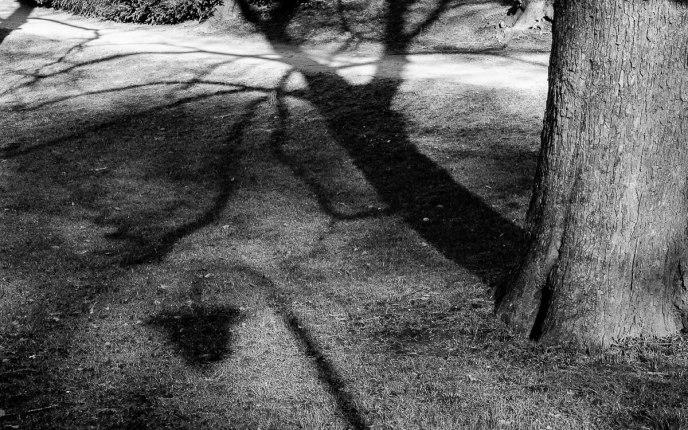 Schaduw van een boom en een lantaarnpaal in het Noorderplantsoen van Groningen.