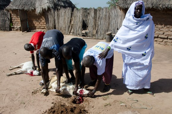Slaughtering a goat for the Koriteh festival.
