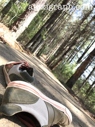 Close-up of a pair on sneakers on a trail through the woods