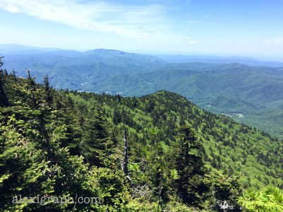 View from atop Roan Mountain, Tennessee
