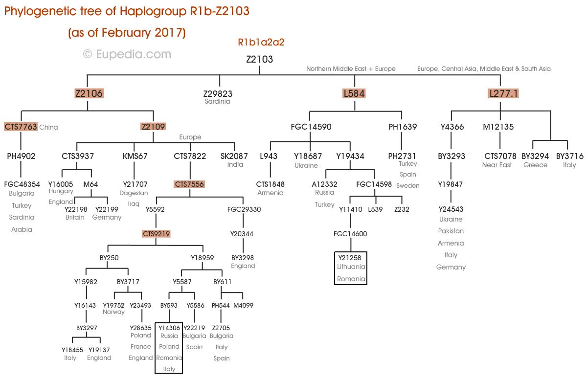 kicker cvr 15 wiring diagram 1970 volkswagen beetle 12 subwoofers 2 ohm