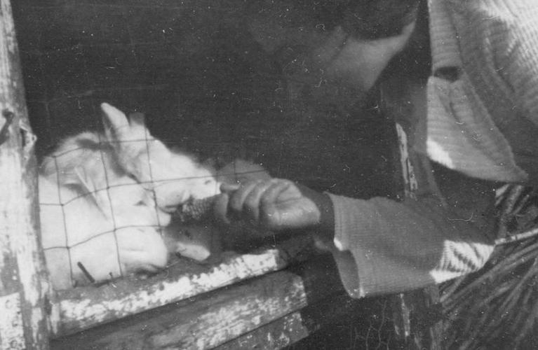 Babcia feeding bunies