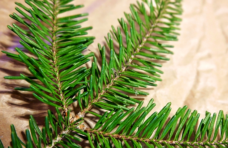 Spruce Branches | Alex Inspired