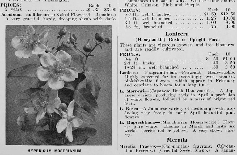 Fruitlands | Catalogue Example